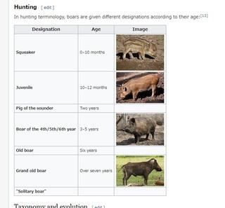 wikiboaritiran.jpg